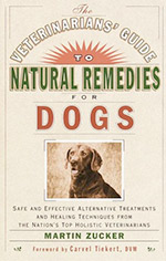 Veterinarians' Guide to Natural Remedies for Dogs